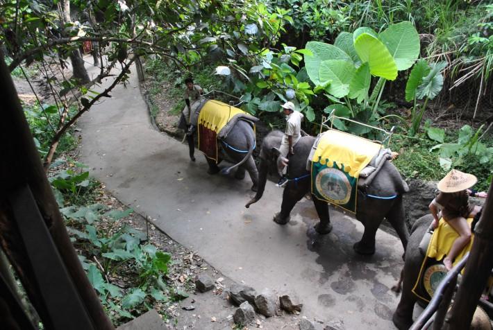 バリ・サファリ&マリンパーク バリ島動物園