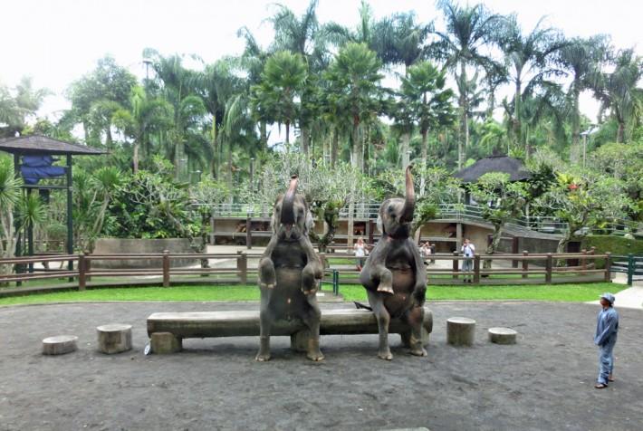 エレファント サファリ パーク ゾウに乗って散歩する