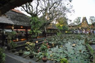 カフェロータス Cafe Lotus
